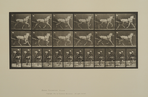 "Eadweard Muybridge, Plate 611. Animals and movement, horses trotting; sulky; gray mare, ""Katydid"". From Volume 9, Horses of Animal Locomotion: an electrophotographic investigation of consecutive phases of Animal Locomotion, 1887. Gift of Mr. Jack Greenwald."