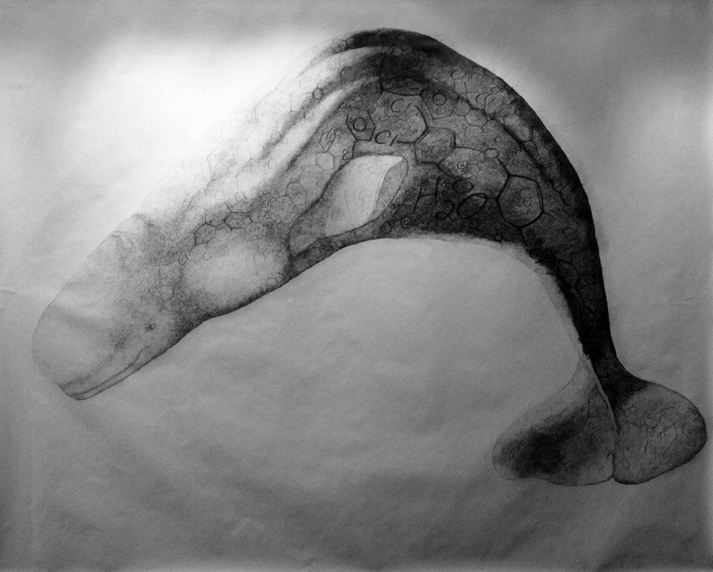 Erica Gajewski, Mercury, Water, PCB, DDT, 2008 graphite on paper 274.3 x 365.7 cm Collection of the artist