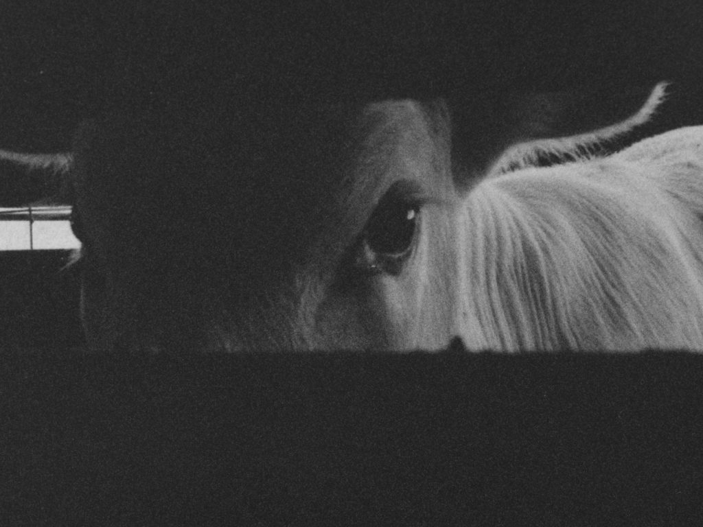 Derek Jenkins, still from Livestock, 2019 16 mm black and white film and sound installation Courtesy of the artist and Canadian Filmmakers Distribution Centre