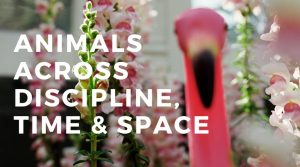 Animals Across Discipline, Time and Space