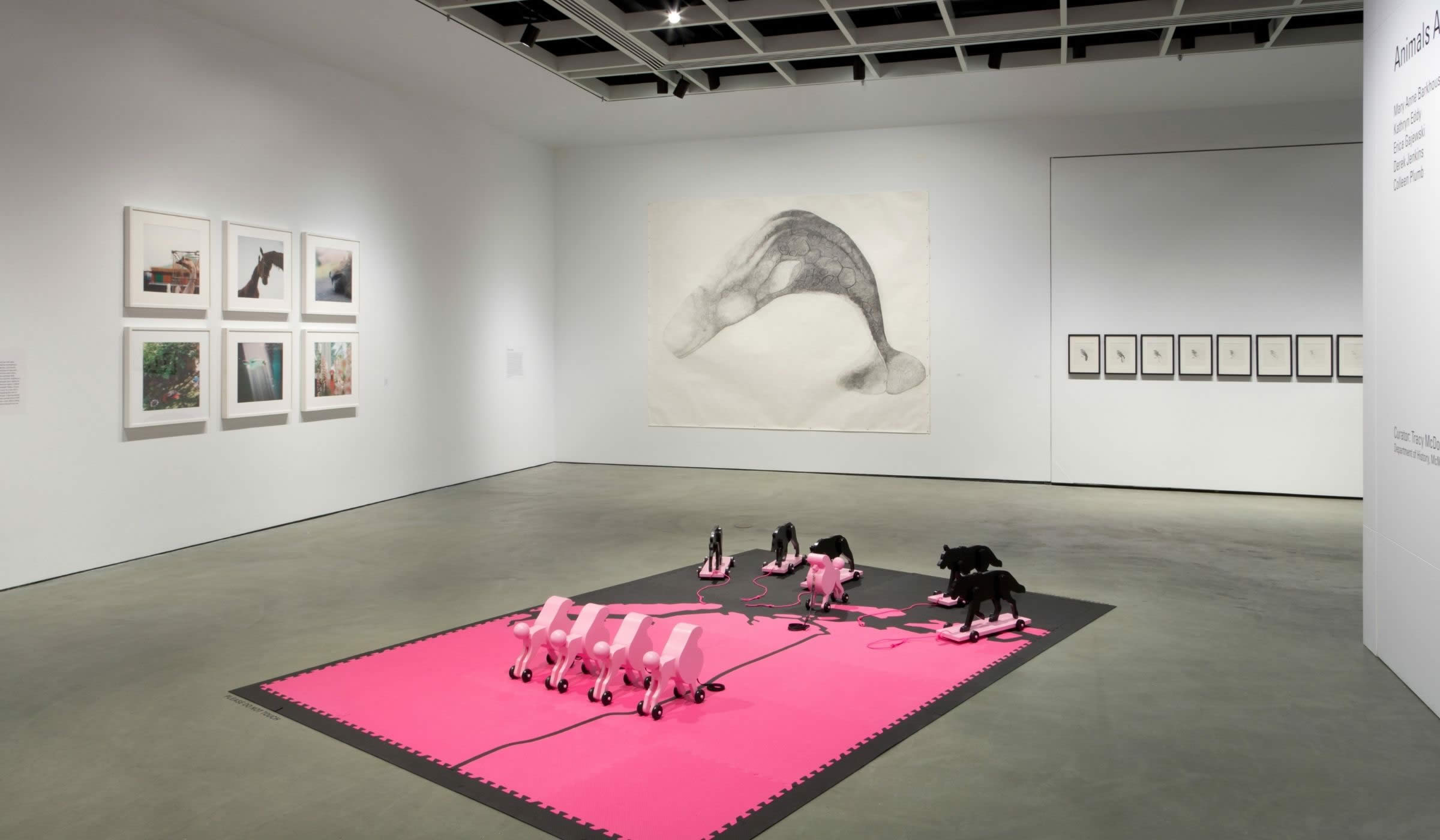 Animals Across Discipline, Time & Space installation view